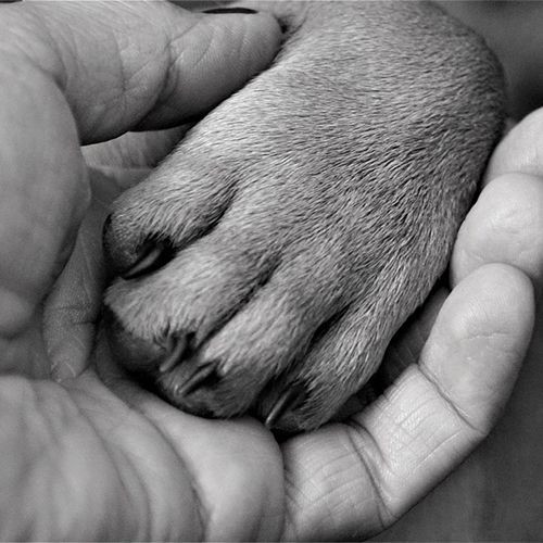 Holding Paw