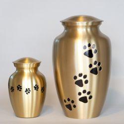 brass-paw-together